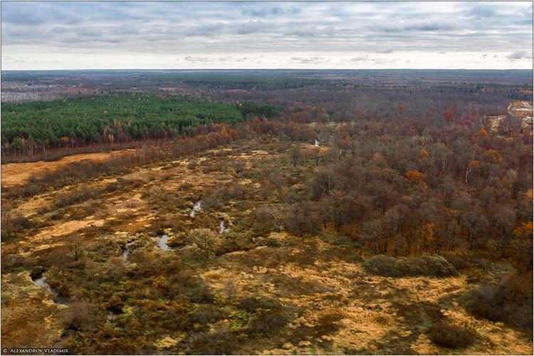 Брянский лес с высоты птичьего полета