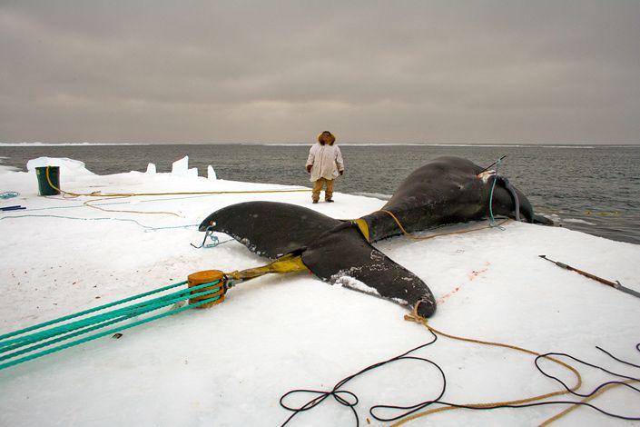 ohota-na-kitov