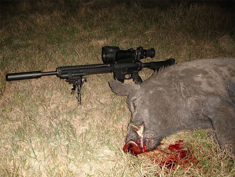 Ночная охота в техасе